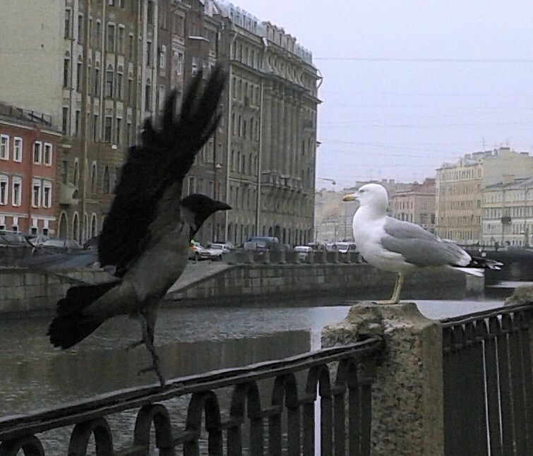 a crow and a gull