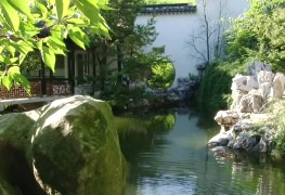 Жизнь растений в классическом китайском саду учёного