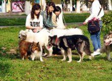 Домашние животные в Китае.