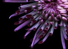 Жизнь цветов. Коротка, но так многогранна.
