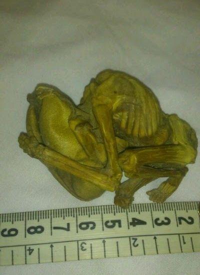 В Иране обнаружена маленькая мумия инопланетянина