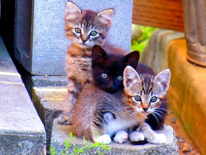 Кошачье трио. и как ухаживать за котёнком.
