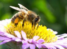 Пчела bee